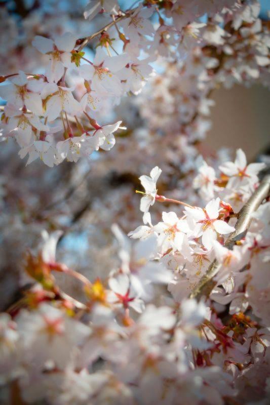 spring-2219627_1920